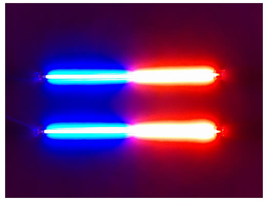 Blue/Red Neons - 30cm (12 inch)
